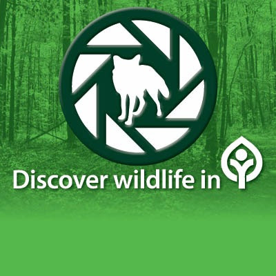 New Project: Focus on Wildlife — Cleveland Metroparks