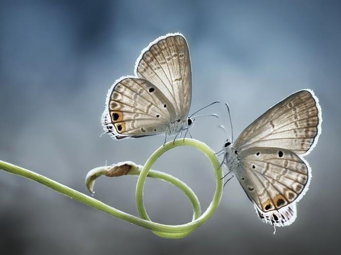 3925073_5700205R3L8T8D1000butterfliesplanttwinsymmetry_79786_990x7422 (700x524, 84Kb)