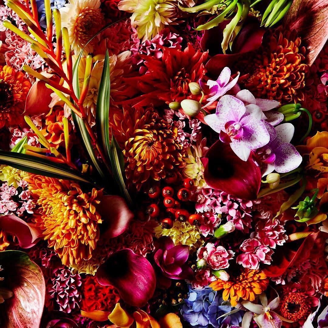 encyclopedie-fleurs-01
