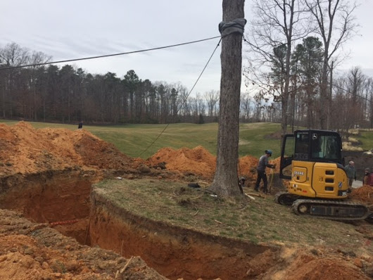 Tree Relocation Update - #15