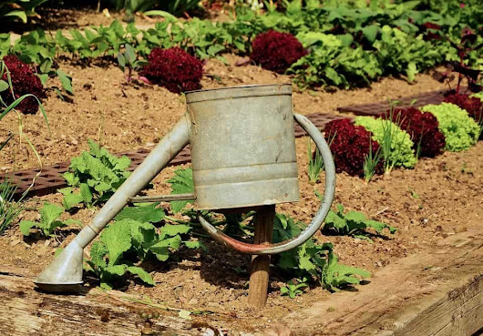 How Gardening can benefit your health