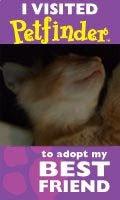 Wants a cute kitteh like us?
