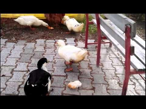 Bozkır Doruk Çay Bahçesinin Ev Sahipleri 23.12.2012