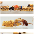 French Artist Gives Caddisfly Larvae Gold & Jewels to Build Their Protective Cases