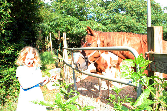 horseslikeapples