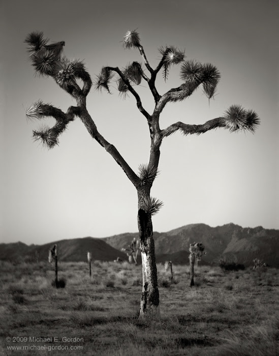 The Joshua Tree Galleries Michael E Gordon Photographic Artist