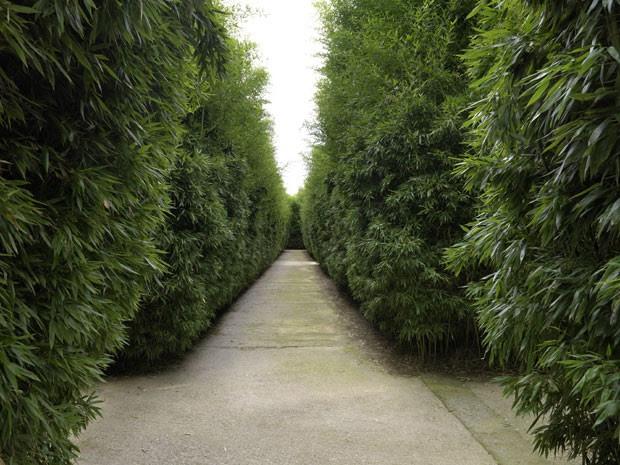 Corredores do labirinto, todo feito com diferentes variedades de bambu (Foto: Massimo Listri/Divulgação)