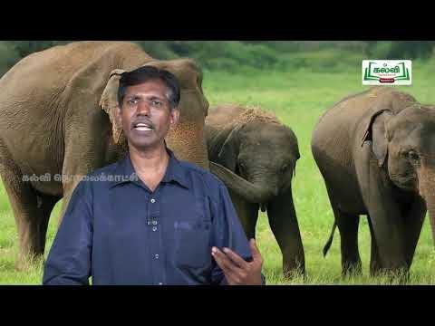 யாமறிந்த மொழிகளிலே Std 11 தமிழ் யானை டாக்டர் Kalvi TV