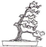 Fukinagashi Bonsai
