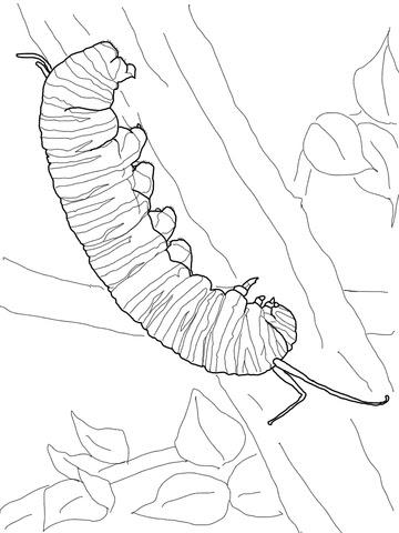 Dibujo De Oruga De Mariposa Monarca Para Colorear Dibujos Para