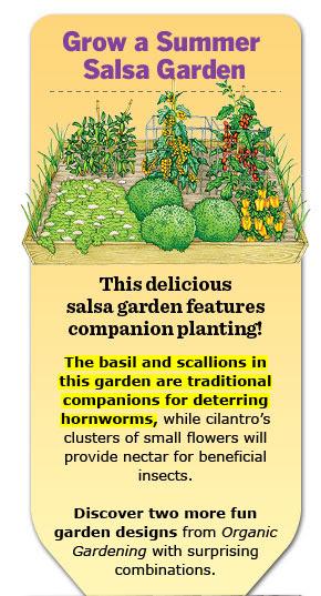 Grow a Summer Salsa Garden