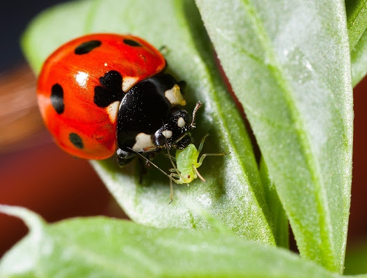 Gardening: Truly Non-Toxic Pest Control