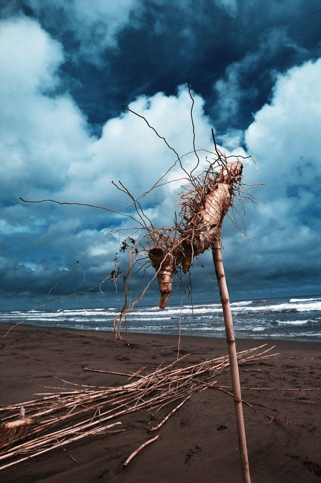 Reed root abstraction on Delta de l' Ebre beach, Tarragona, Catalonia, Spain [enlarge]