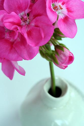 geranium. season finale