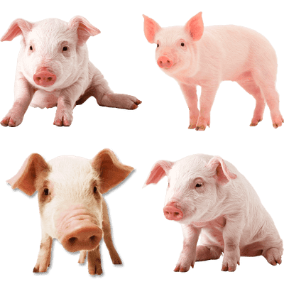 Animals transparent PNG images - Page4 - StickPNG