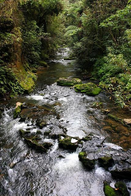 Ruakuri Stream