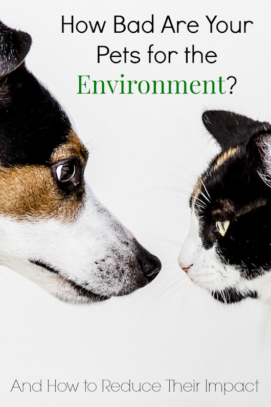 How Bad Are Your Pets for the Environment?