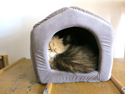 Review: PAWZ Road Cat House Review | Meow Lifestyle