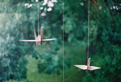 Jadi Burung Pun Belum Tentu Bebas