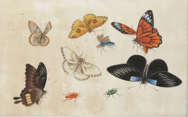 watercolour sketch of insects (China)