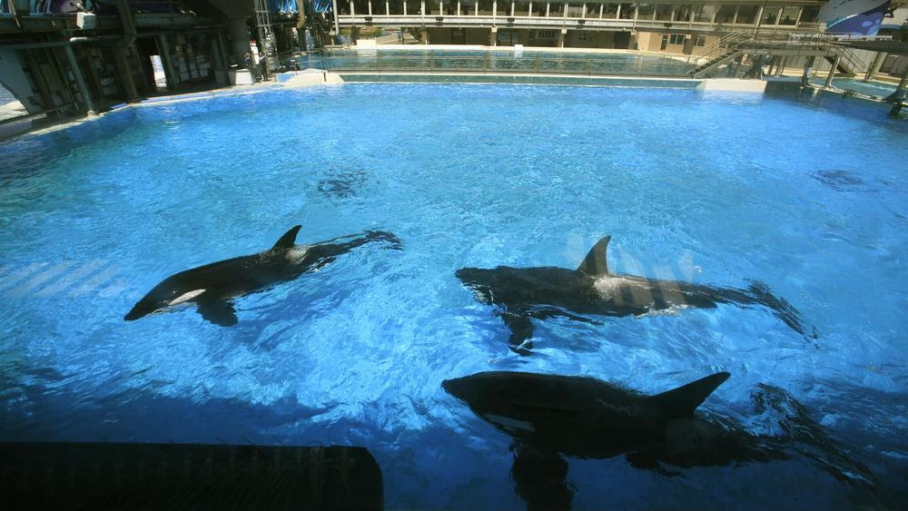 Should We Be Worried about SeaWorld's Larger Tanks?