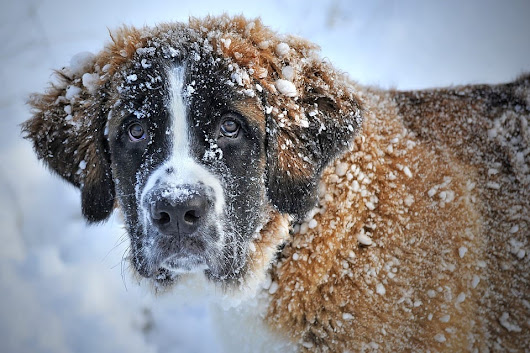 Winter and Your Dog: What You Need to Know - Scottsdale Pet Hotel