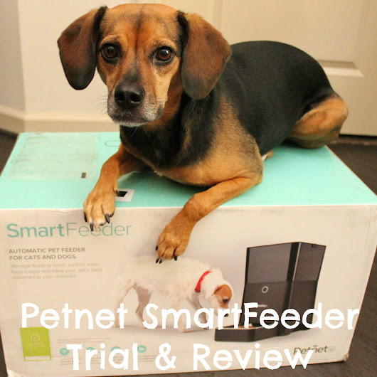 Set Up a Feeding Schedule From Your Phone with the Petnet SmartFeeder