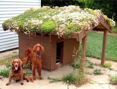 Dog house with succulents