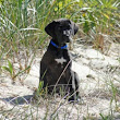 Dog Friendly Hikes in Provincetown | Provincetown Pet Resort and Supplies