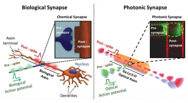 Photonic Synapse