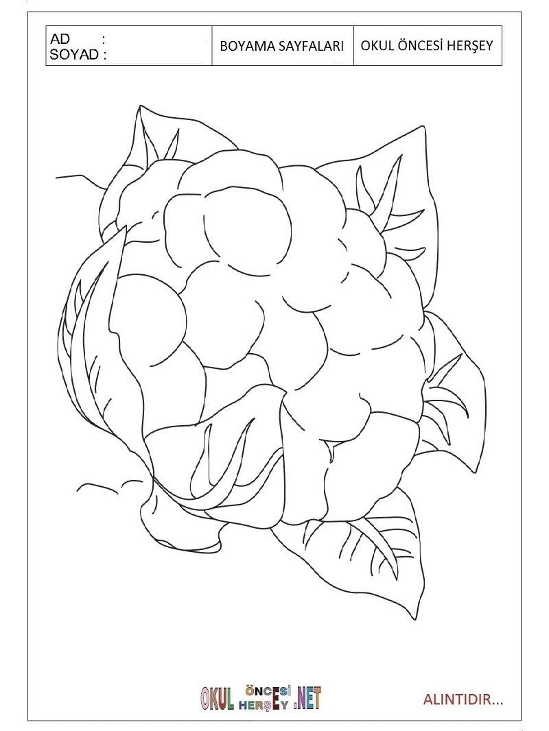 Karnabahar Boyama Sayfaları