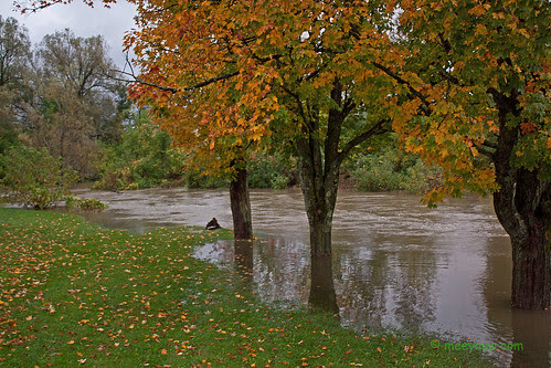 Barton River Flooding    04.jpg