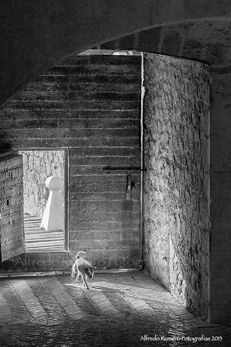 El perro del hortelano by Alfredo Romero Fotografias 