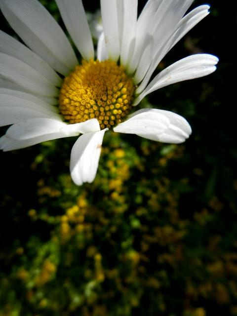Frantsila_2012_6