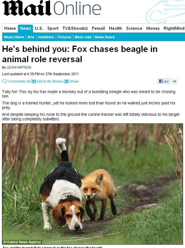 Cão de caça é flagrado sendo seguido por raposa