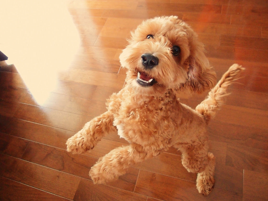 The 12 Cutest Mixed Breed Dogs  Dog Reference