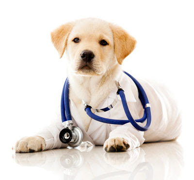 Labrador puppy wearing a lab coat | Tacky Harper's Cryptic Clues