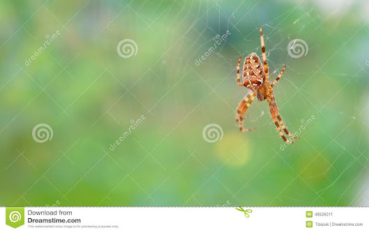 Spider In Web Stock Photo - Image: 48526011