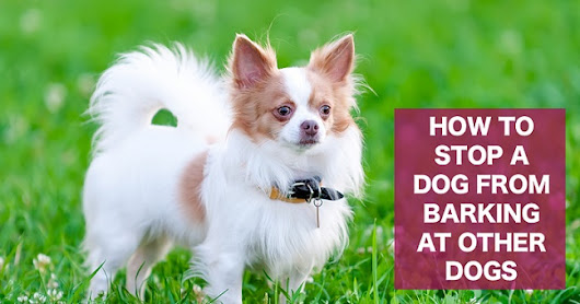 Stop A Dog From Barking And Growling At Other Dogs On Walks - ThatMutt.com: A Dog Blog