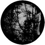Meshed Woodlands, Stock Gobo For Gobo Light Projectors, Choose Your Size | Event Decor Direct
