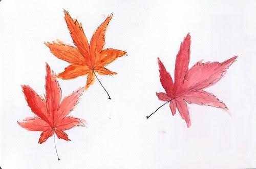 Japanese maple leaves study