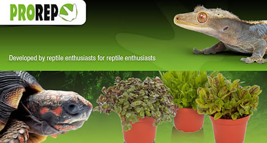 Grow Your Own Reptile Food! ProRep's Edible Plants | Reptile Centre