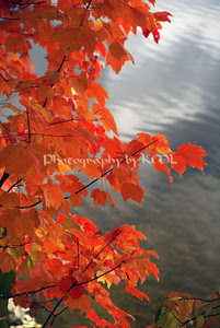 red leaves against the water in the autumn