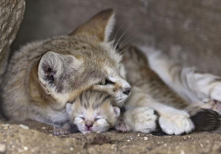 Mother Cat Litter Died