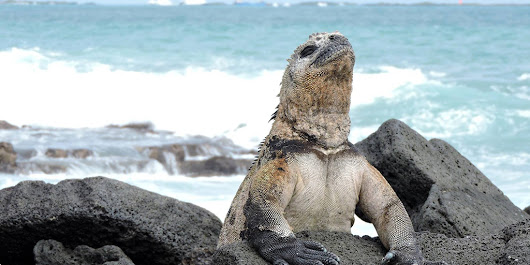 Last minute Galapagos tour for 5 days
