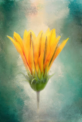 Unfolding Flower by Terry Davis
