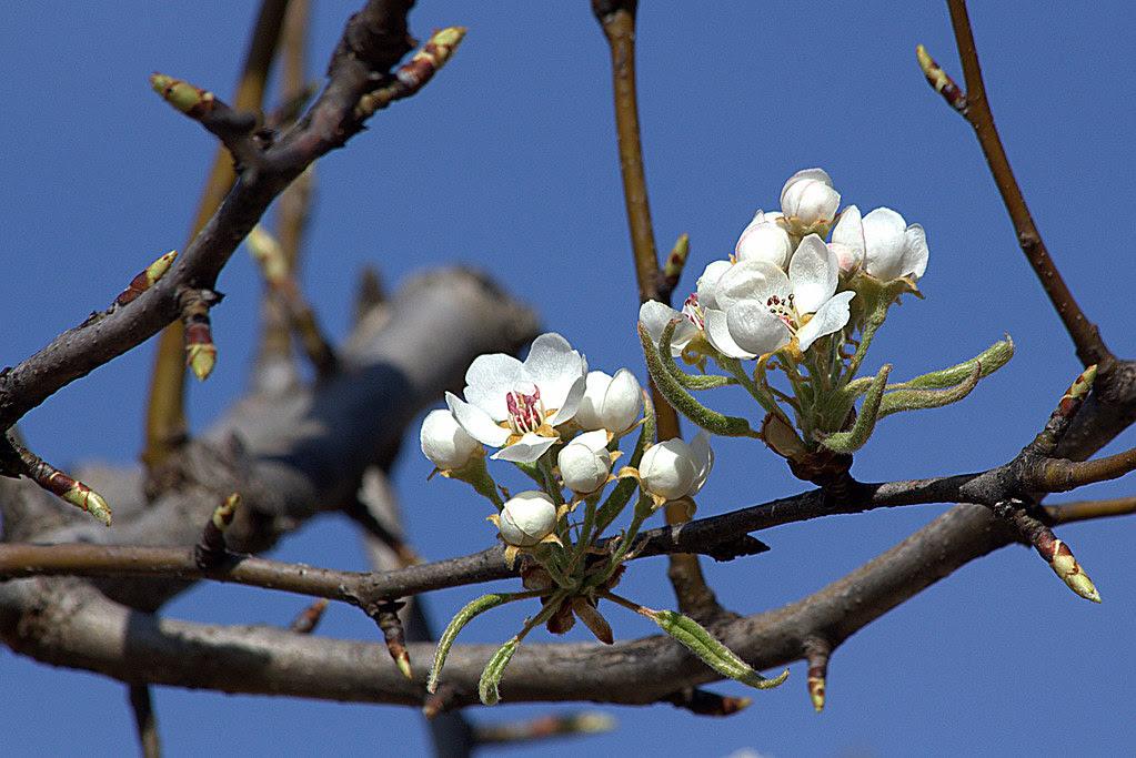 Jardines de Aranjuez a mediados de marzo