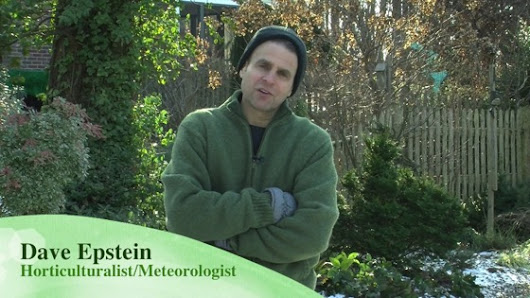 On YouTube: Winter Interests in the Landscape |  A Gardener's Notebook