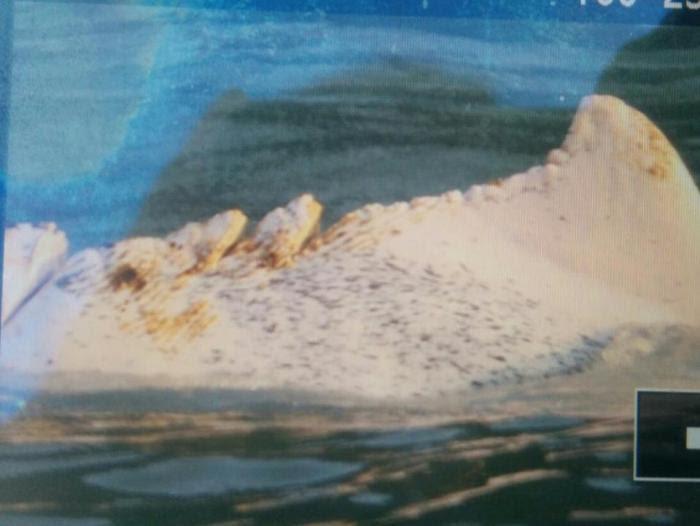 海豚背部受傷嚴重,傷口清晰可見。