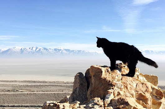 'Catting' allows you to see the world in a whole new way – Adventure Cats